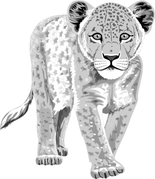 Snow Leopard clipart #13, Download drawings