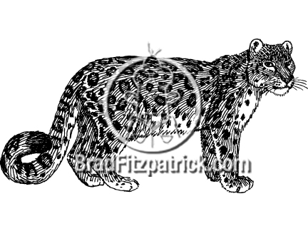 Snow Leopard clipart #8, Download drawings