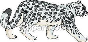 The Snow Leopards clipart #3, Download drawings
