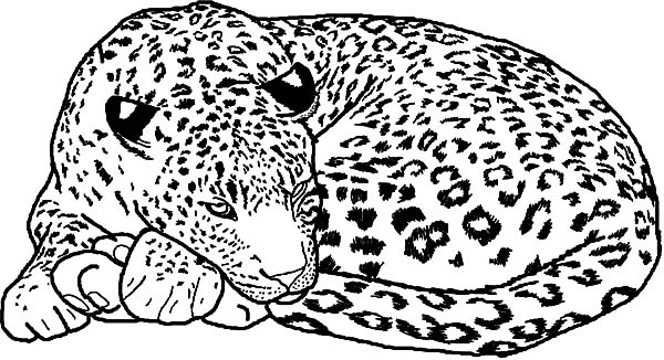 wild cats coloring pages print - photo#34