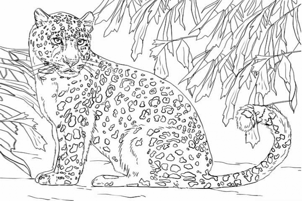 The Snow Leopards Coloring Download The Snow Leopards