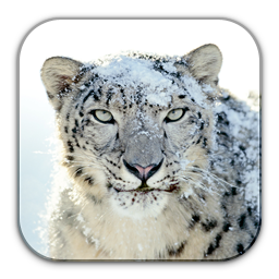 Snow Leopard svg #6, Download drawings