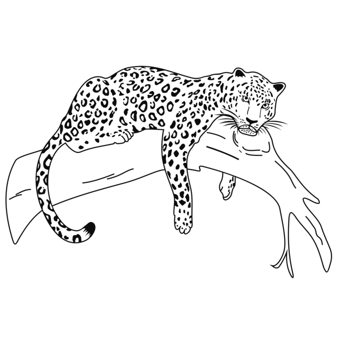 Snow Leopard svg #9, Download drawings