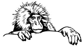 Snow Monkey clipart #16, Download drawings