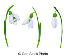Snowdrop clipart #14, Download drawings
