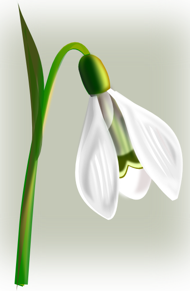 Snowdrop clipart #10, Download drawings