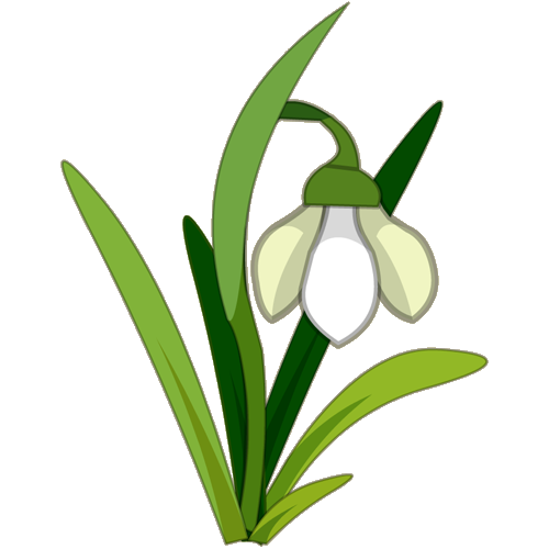 Snowdrop clipart #7, Download drawings