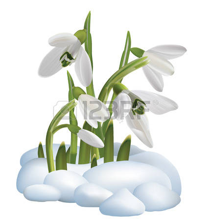 Snowdrop clipart #9, Download drawings