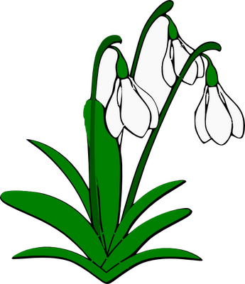 Snowdrop clipart #20, Download drawings