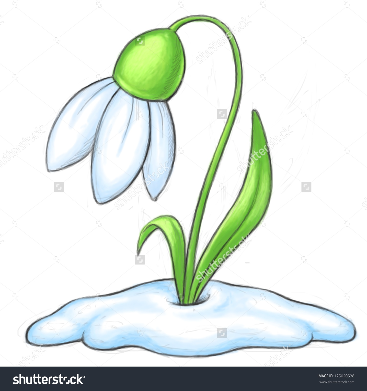 Snowdrop clipart #12, Download drawings