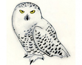 Snowy Owl clipart #15, Download drawings