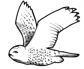 Snowy Owl clipart #7, Download drawings