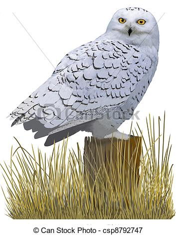 Snowy Owl clipart #2, Download drawings