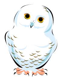 Snowy Owl clipart #17, Download drawings