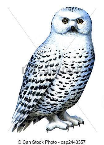 Snowy Owl clipart #16, Download drawings