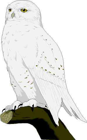 Snowy Owl clipart #4, Download drawings