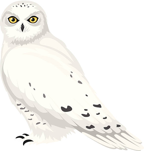 Snowy Owl clipart #13, Download drawings