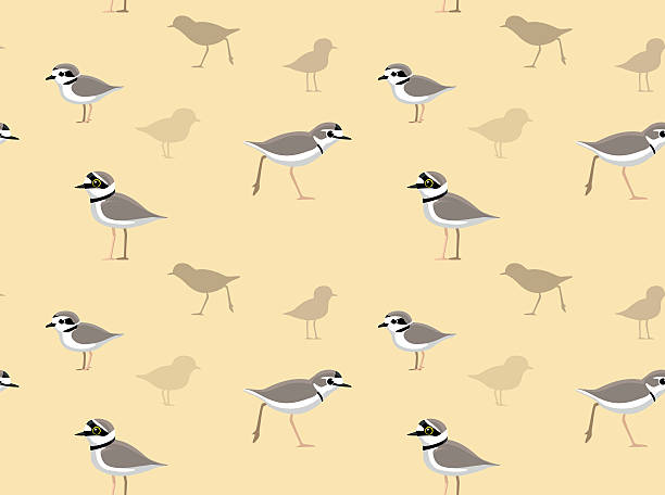Snowy Plover clipart #5, Download drawings