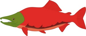 Sockeye Salmon clipart #1, Download drawings