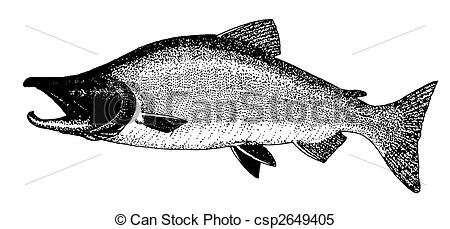 Sockeye Salmon clipart #9, Download drawings
