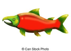 Sockeye Salmon clipart #8, Download drawings