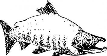Sockeye Salmon clipart #15, Download drawings