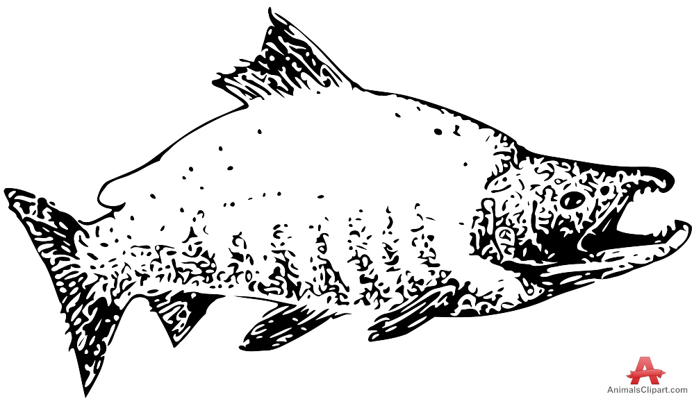 Sockeye Salmon clipart #19, Download drawings