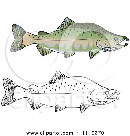 Sockeye Salmon clipart #12, Download drawings