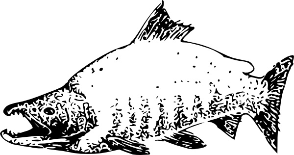 Sockeye Salmon clipart #3, Download drawings