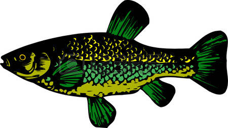 Sockeye Salmon clipart #13, Download drawings