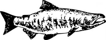 Sockeye Salmon clipart #7, Download drawings
