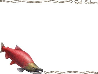 Sockeye Salmon clipart #11, Download drawings