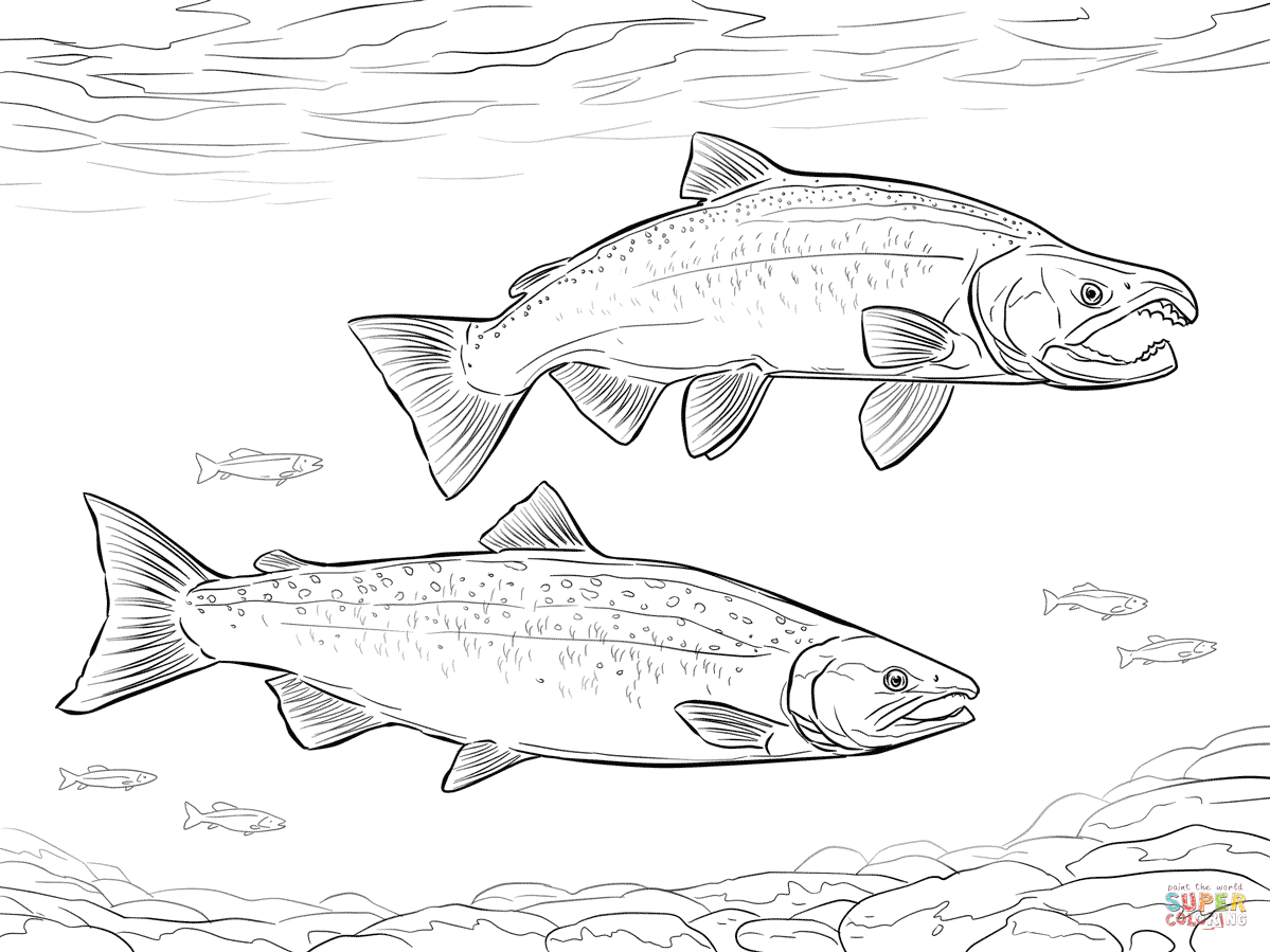 Salmon Fish Coloring Pages