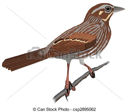Song Sparrow clipart #1, Download drawings