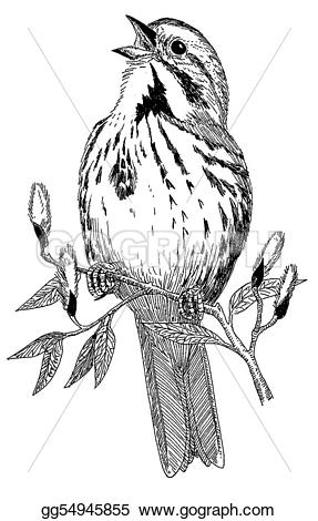 Song Sparrow clipart #11, Download drawings