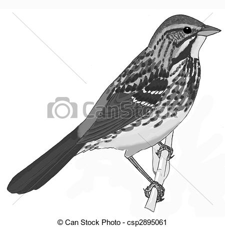Song Sparrow clipart #8, Download drawings