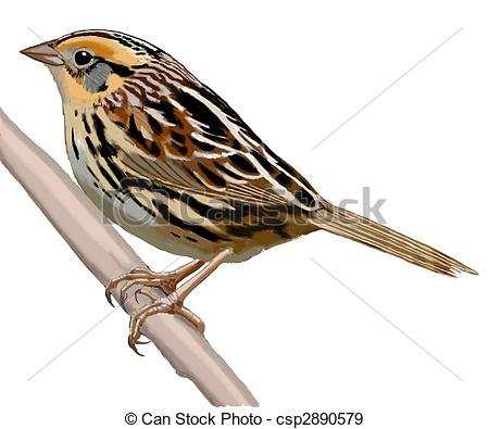 Swamp Sparrow clipart #16, Download drawings
