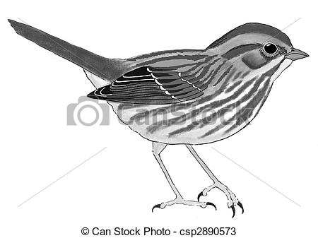 Song Sparrow clipart #19, Download drawings