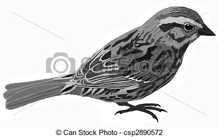 Song Sparrow clipart #13, Download drawings