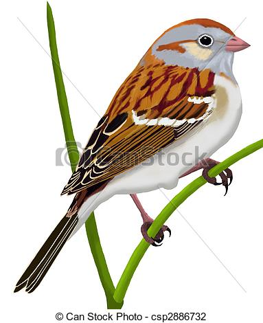 Sparrow clipart #19, Download drawings