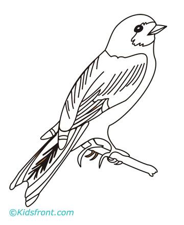 Wren coloring #19, Download drawings