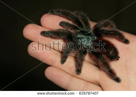 South American Cave Spider clipart #15, Download drawings