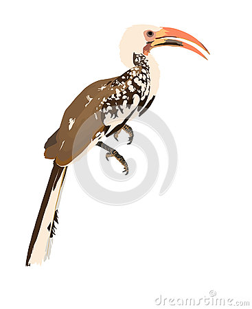 Southern Yellow-billed Hornbill clipart #6, Download drawings