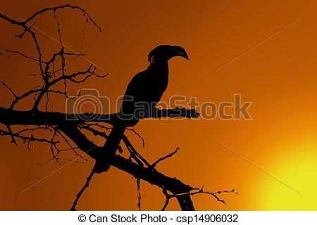 Southern Yellow-billed Hornbill clipart #16, Download drawings