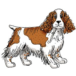 Spaniel clipart #2, Download drawings