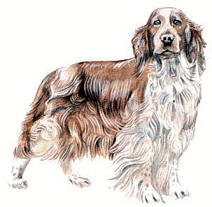 Spaniel clipart #12, Download drawings