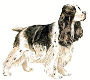 Spaniel clipart #16, Download drawings