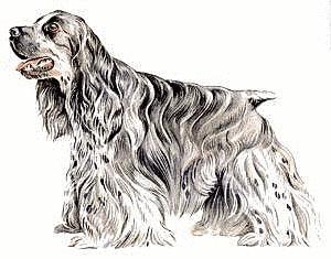 Spaniel clipart #13, Download drawings