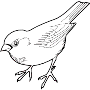 Sparrow clipart #11, Download drawings