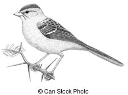 Sparrow clipart #10, Download drawings